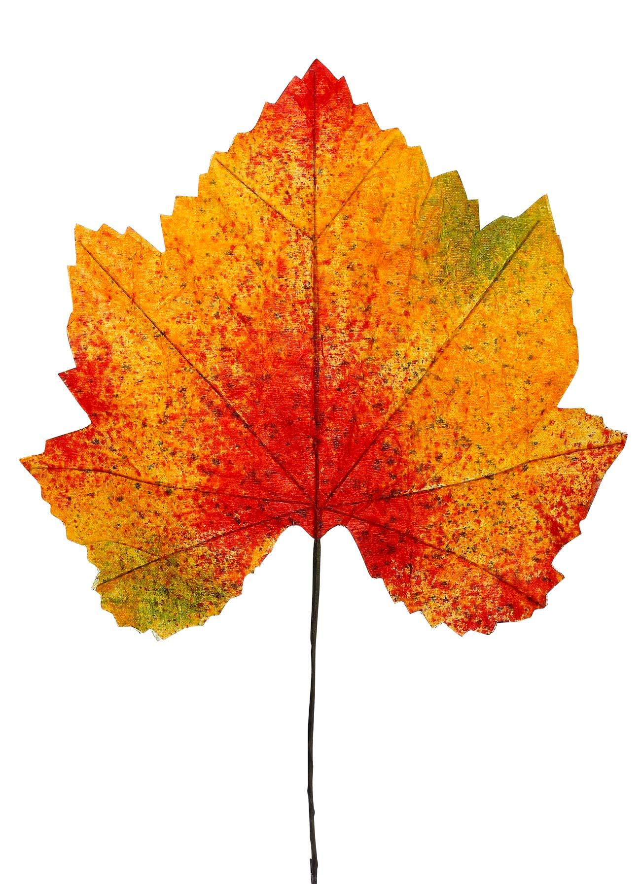 Grune Farbe Herstellen : Blätter im Herbst – Sinnbilder für Leben und Auferstehung Eine